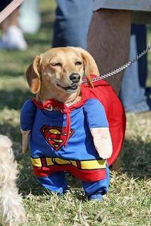 super_dog_2.jpg